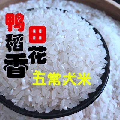 这是一张关于鸭稻米 一等品 早稻 粳米 的产品图片