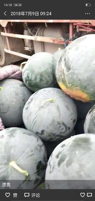这是一张关于8424西瓜 8斤打底 8成熟 1茬 无籽 的产品图片