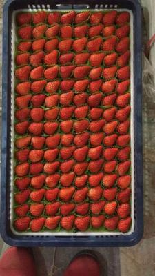江苏省南通市通州区红颜草莓 20克以上