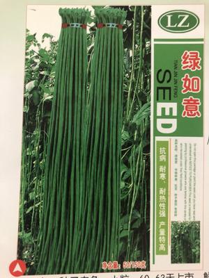 山东省潍坊市寿光市长豇豆 70cm以上 70厘米以上