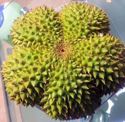 云南省昆明市东川区甲仑榴莲 1.5公斤 80 - 90%以上