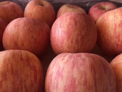 陕西省咸阳市礼泉县红富士苹果 80mm以上 条红 纸袋