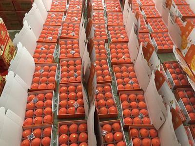 这是一张关于翠宝甜瓜 0.5斤以上 的产品图片