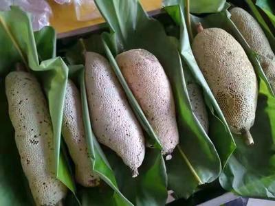 云南省西双版纳傣族自治州景洪市小挂蜜 盒装 2年以上 100%