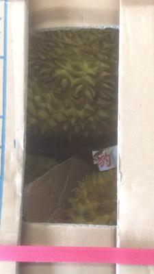 山东省潍坊市奎文区越南金枕榴莲 3 - 4公斤 90%以上