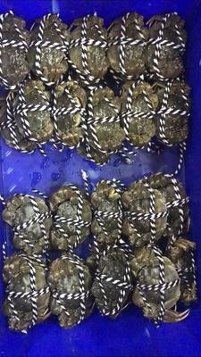 这是一张关于高邮湖大闸蟹 母蟹 2.0两以下 的产品图片