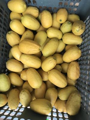 广西壮族自治区崇左市江州区香水柠檬 2.7 - 3.2两