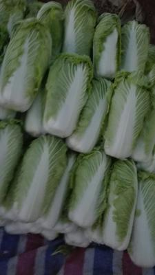 山东省临沂市兰陵县青杂三号白菜 3~6斤 净菜