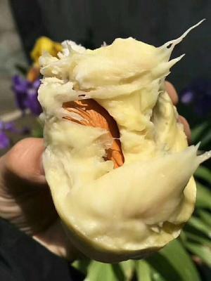 广西壮族自治区南宁市兴宁区巴掌榴莲 2公斤以下 90%以上 1个装2到3斤!
