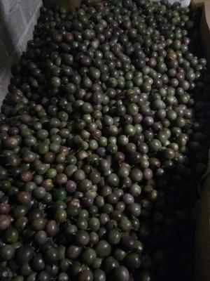 广西壮族自治区贺州市八步区紫色百香果 60 - 70克