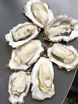 这是一张关于乳山牡蛎 人工殖养 2-3两/只 的产品图片