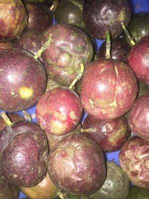 广东省茂名市茂南区紫香一号百香果 统货 次果,凹凸果