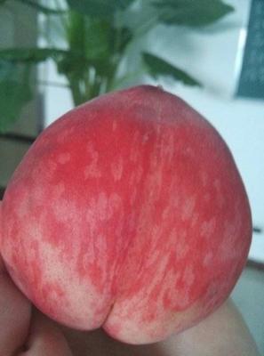 重庆大渡口区水蜜桃 80mm以上 4两以上