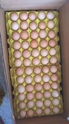 上海青浦区土鸡蛋 箱装 食用