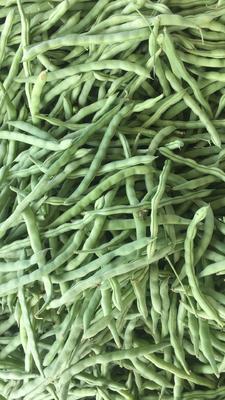广西壮族自治区北海市合浦县白花四季豆 30cm以上