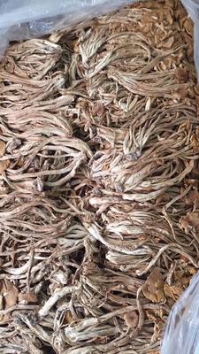 茶树菇 半年 箱装