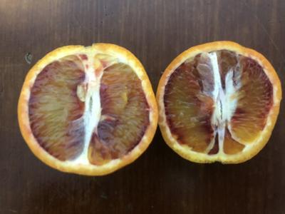 这是一张关于血橙 6075mm 4-8两 的产品图片