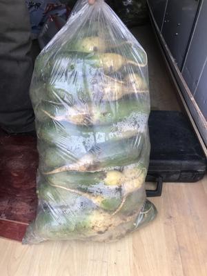 山东省青岛市平度市青皮绿萝卜 0.2~1斤
