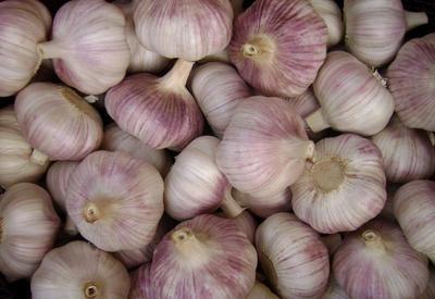 江苏省徐州市邳州市红皮大蒜 5.5-6.0cm 多瓣蒜