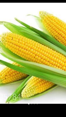 湖北省恩施土家族苗族自治州建始县甜玉米 带壳 甜