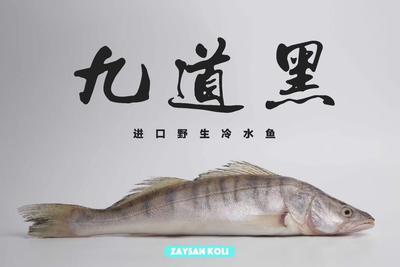 上海浦东新区冷冻梭鲈鱼