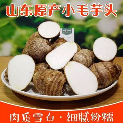 陕西省西安市雁塔区毛芋头 5cm以上