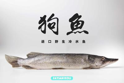 上海浦东新区冷冻狗鱼