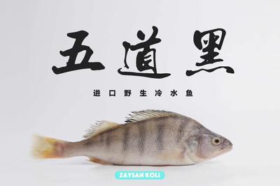 上海浦东新区冷冻鲈鱼