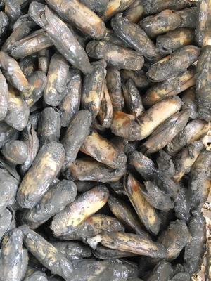 这是一张关于缢蛏 30-50只/公斤 人工殖养 的产品图片