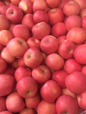 山东省烟台市莱州市红富士苹果 80mm以上 片红 纸袋