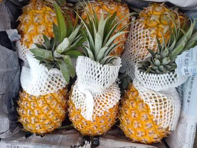 广西壮族自治区玉林市玉州区徐闻菠萝 3 - 4斤