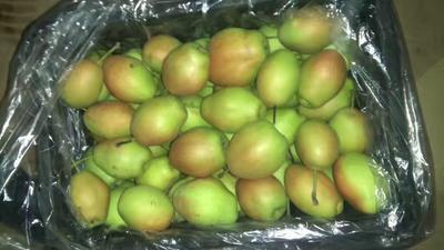 河南省郑州市金水区红香酥梨 65mm以上 60-100g