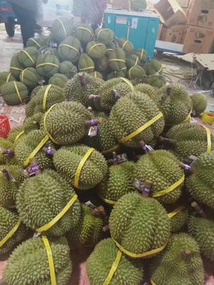 这是一张关于泰国甲仑榴莲 2 - 3公斤 60 - 70%以上 的产品图片