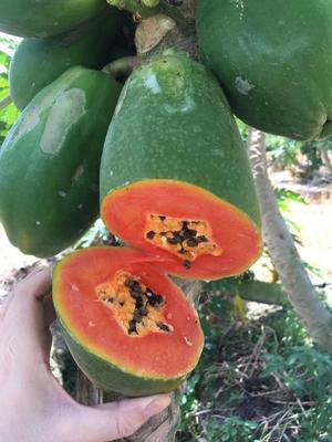 这是一张关于红心木瓜 1.5 - 2斤 正宗雷州红心木瓜的产品图片