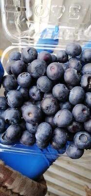 这是一张关于智利蓝莓 12 - 14mm以上 鲜果 的产品图片