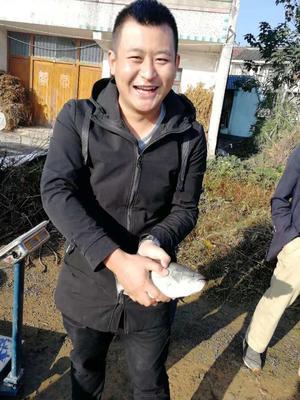 浙江省湖州市德清县加州鲈鱼 1-1.5公斤 人工养殖