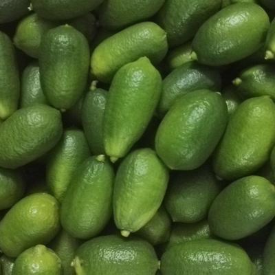 海南省三亚市海棠区青柠檬 1 - 1.5两