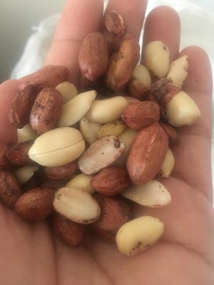 山东省青岛市李沧区油料花生米 花生米 干货
