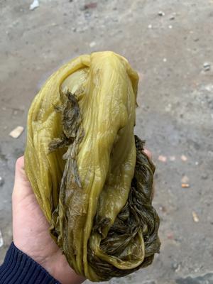 广东省惠州市博罗县酸菜