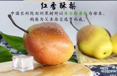 陕西省渭南市临渭区红香酥梨 75mm以上 300-350g