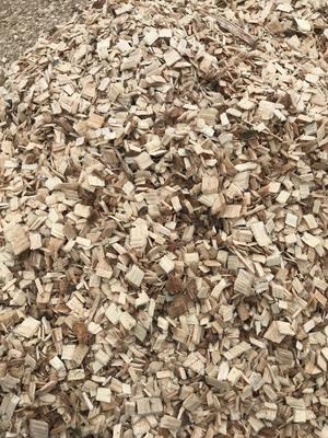 陕西省汉中市汉台区菌棒(不含菌种) 提供做带料香菇的锯末