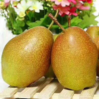 陕西省西安市雁塔区红香酥梨 55mm 100-150g