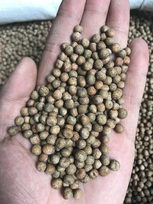 山东省临沂市兰山区麻豌豆 5-7cm