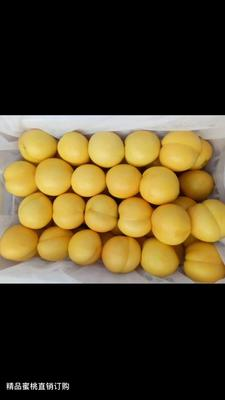 浙江省金华市婺城区黄油桃 4两以上 55mm以上