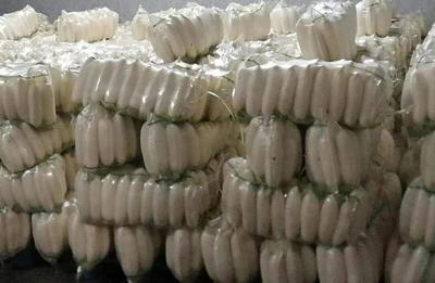 湖南省娄底市娄星区韩国白萝卜 2~2.5斤