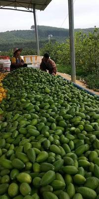 广西壮族自治区南宁市西乡塘区香水柠檬 2 - 2.6两