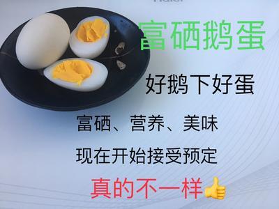 辽宁省沈阳市新民市鲜鹅蛋 箱装 食用