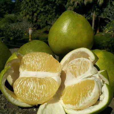 云南省昆明市官渡区泰国青柚 1.5斤以上