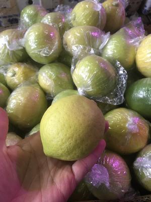 广东省广州市白云区香水柠檬 1 - 1.5两