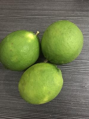 海南省临高县临高县台湾香水柠檬 2.7 - 3.2两